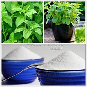 Vistaric 200 Hierba Stevia Rebaudiana Impresionante (sustituto del azúcar) SEMILLAS