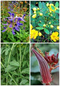 CUSHY 1: Germination 95% + 3 Groupes Pour Select Seeds 4 en 1 Lot pour le jardin bon pour la santé comestible 1 organique