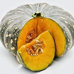CUSHY Royaume-Uni: Pumpn Sweet- ernut bangladais Auwshau Mistikumra 10 graines