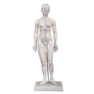 66fit Modèle de corps humain féminin pour l'acupuncture – 48cm – Points de pression et méridiens
