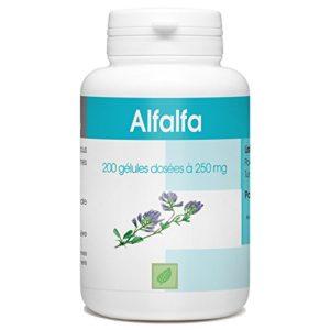 Alfalfa – 250 mg – 200 gélules