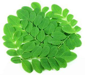 Asklepios-seeds® – 25 Kg graines de Moringa Oleifera, moringa, rède mouroum, néverdier, arbre pilon