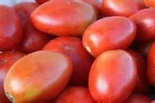 Fash Lady 200 graines de pépins de tomates Amish Paste