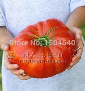 Fash Lady 25 graines de tomates au bœuf bifteck nutritives, énorme, riche en saveur, facile à cultiver
