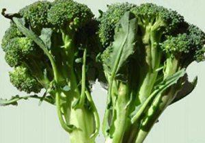 GEOPONICS 70g Calabree brocoli graines ~ 20,000ct Wholeale ~ urvl alimentaire protéine UA