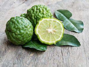 Sanhoc Neuf !!! 20 seedsAmbrosial Kaffir citron vert huile essentielle, herbes thaïlandaises et cuisine