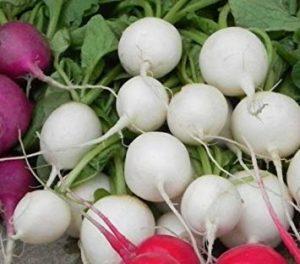 Fash Lady Hailstone radis 500 graines NON OGM ez poussent E87