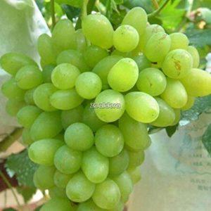AGROBITS TYPE9: New N Santé Fonction Avantages Fruits nourrissants pépins de raisin Ff
