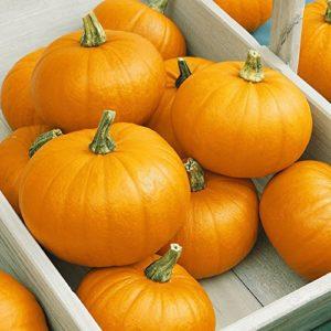 Portal Cool 20 Spookie Graines de citrouille – Everwilde Mylar Farms Seed Packet