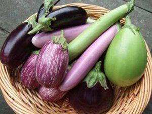 AGROBITS Emera: 100pcs Egg Kin Rare Vegables Organic voir Viable