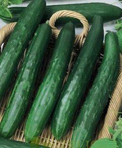 AGROBITS GERGANAs non-OGM Bulgaria10D