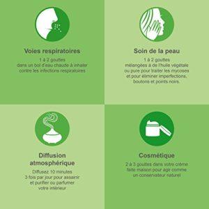 Huile essentielle d'ARBRE À THÉ (Tea Tree) BIO – 30 ml – 100% Pure et Naturelle, HEBBD, HECT – distillée en France certifiée Biologique